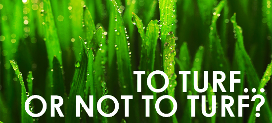 TO TURF OR NOT TO TURF