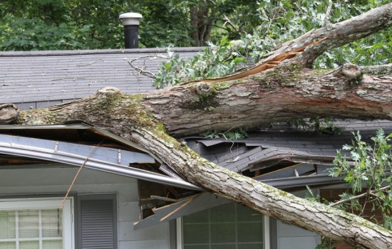 Tree damage Home Insurance